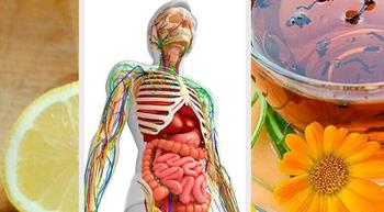 Натуральные средства для детоксикации лимфатической системы