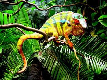 Самые яркие представители животного мира