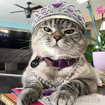 17 фотографий, которые доказывают, что котикам можно все. И даже немного больше