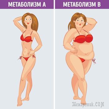 Что такое метаболическая диета и почему она действительно работает