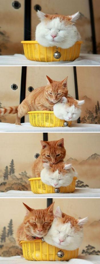 Если кошка не лезет в коробку, это неправильная кошка