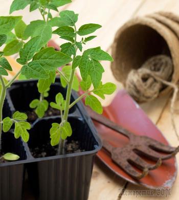 Какой должна быть температура для выращивания рассады
