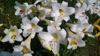 Какие цветы дарить разным знакам Зодиака: полезные рекомендации астрологов