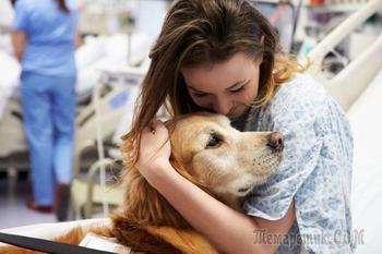 Секретные способы, при помощи которых животные помогают людям