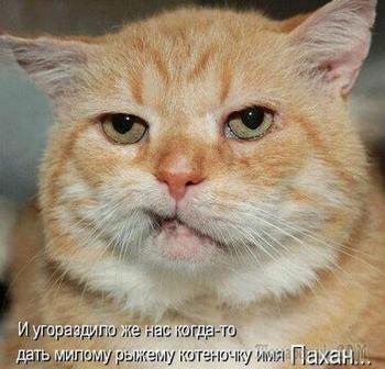 Звери всякие нужны, звери всякие важны)))