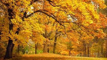 Сезонный ловелас…