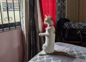 Домашние животные, которым интересно, что происходит на улице