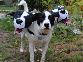 Костюмы на Хэллоуин для собак