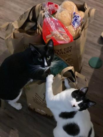 20 историй, в которых люди завели больше одного кота и вдруг поняли, насколько же это круто