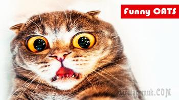 Смешные животные / Приколы с котами #1