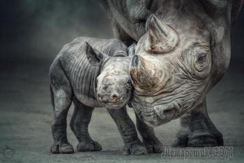 35 великолепных фото носорога