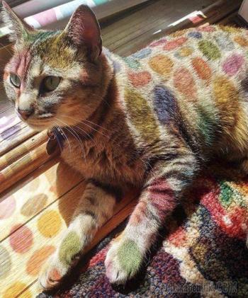 Доказательства того, что быть котом — настоящее искусство