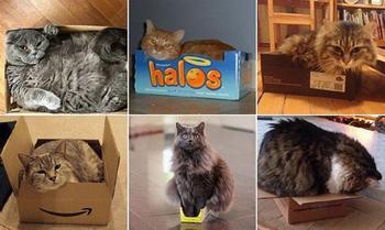 Кошки и коробки