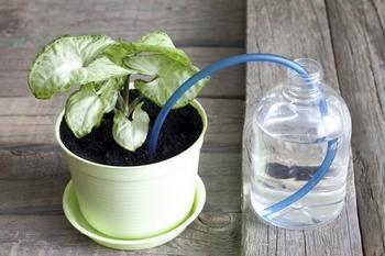 Как поливать растения во время отпуска