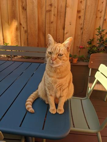 18 котиков в гостях не у себя дома