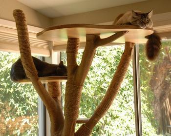 Лазалка для кошки из спиленного дерева