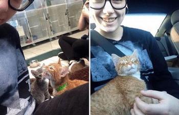 Глядя на этих 15 котов невозможно оставаться серьезным