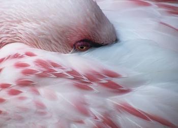 Фламинго - самые древние птицы на Земле