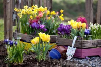 Чем подкормить цветы весной