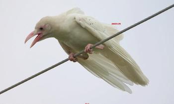 20 редких животных-альбиносов, которые выглядят как сбой в матрице