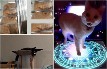 15 симпатичных котиков, которые выглядят весьма зловеще