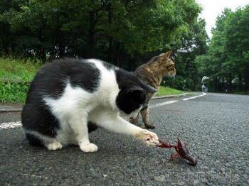 Животные идеально отображающие неловкие любовные ситуации в жизни людей