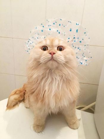 Мипо — очень странный кот, который просто обожает принимать ванну