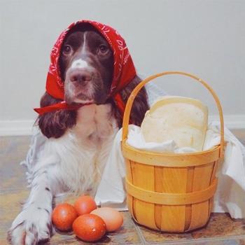Когда оставил свою собаку на неделю у бабушки