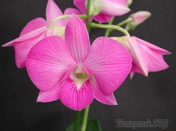 Рай для души эстета: 10 самых прекрасных цветов в мире