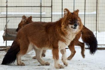 Удивительные животные, которые обитают в России