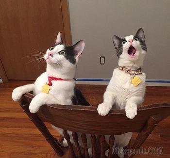20 драматических котов, по которым давно Оскар плачет