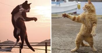 Уличные коты осваивают мастерство кунг-фу