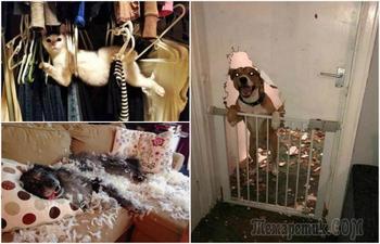 17 животных, которые проштрафились и знают об этом