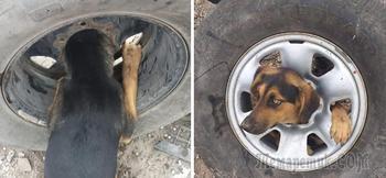 Бездомный пес застрял в автомобильном колесе