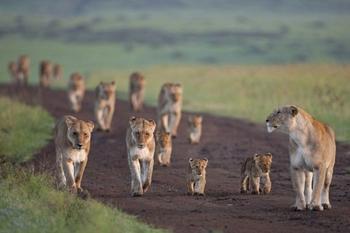 10 видов животных, которых за 40 лет стало в 2 раза меньше по вине человека