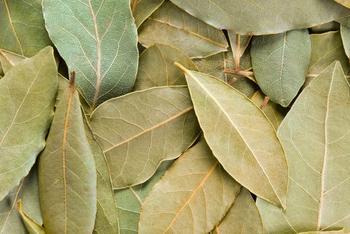 8 обрядов с лавровым листом