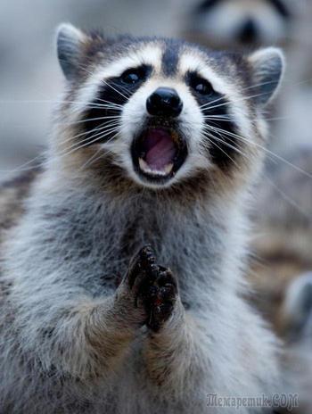 Смешные животные, которые в шоке от увиденного