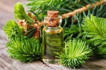Полезные свойства масла хвои