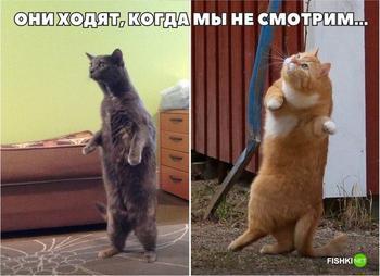 17 фотографий, доказывающих, что кошки медленно превращаются в людей