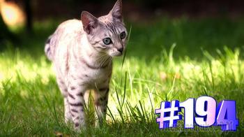 Свежая видео подборка с котиками #194