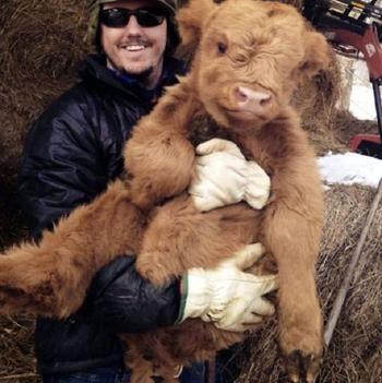 Фотографии очаровательных коров