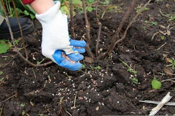 10 дел, для которых нужно пригласить садовника