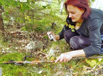 Жителей Ленинградской области попросили не делать селфи с гадюками