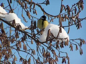5 опасностей, угрожающих растениям в саду в конце зимы и начале весны