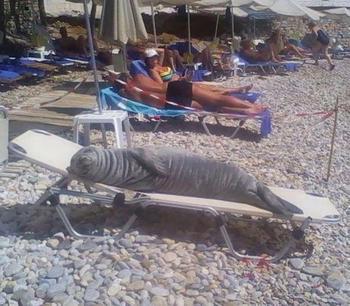 25 раз люди видели на пляже что-то интересное и просто должны были поделиться этим
