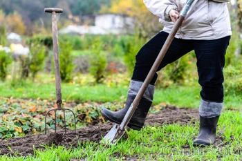 Готовим грядку для выращивания чеснока