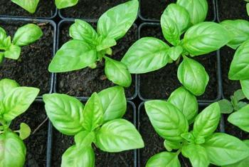 Что можно посеять и посадить в огороде в марте
