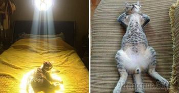 Шедевры кото-фото-искусства