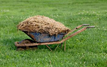 """10 важных вопросов о натуральных удобрениях, или Огород без """"химии"""""""