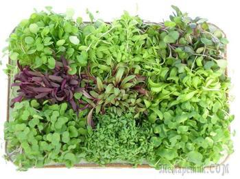 Зелень для жизни. Полезные свойства
